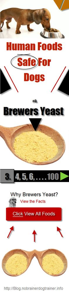 Brewers Yeast is our next Human Foods Safe Dog Dogs Archive.  Fin out more about this amazing spice to add that spice to your Dogs Nutritional Eating habits. Cool Stuff I swear - go check it! http://blog.nobrainerdogtrainer.info/dogs-nutrition/human-foods-safe-for-dogs/