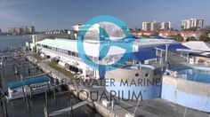 Every visit to Clearwater Marine Aquarium supports our rescue, rehab, release work. Take a look: