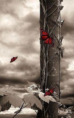 art inspir, butterflies, red butterfli, black