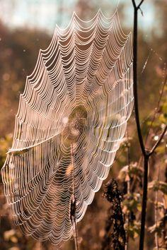 Spider web by Taija Oksanen on 500px
