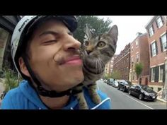 25-year-old Philadelphia bicycle courier Rudi Saldia started taking his kitten, MJ, along with him on his deliveries, propping the cat on his shoulders as he navigates the busy streets of Center City. He recorded the journeys and reactions from those that witness the unusual sight, and after just a few weeks on YouTube the video has well over 1 million views.
