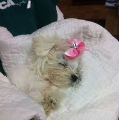 Justice for Charlotte: Rally to Strengthen Animal Cruelty Laws! PLEASE JOIN EVENT! PLEASE SHARE, TOO! Animal abusers must be punished severely!  https://www.facebook.com/events/1470164703257781/