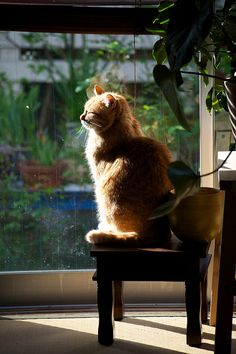 """If you, like me, were made of fur, and the sun warmed you, like me, you'd purr."" --Louis Wain"