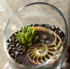 spiral terrarium