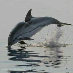 Dolphins on Pinterest | Dolphins, Baby Dolphins and Animal ...