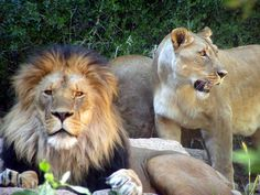 cheyenne mountain zoo pikes peak - #PinPikesPeak