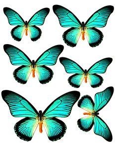 1281140167_55_FT838_aqua_butterflies.jpg (576×720)