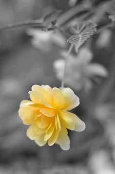 Touch of yellow