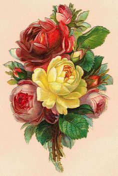 Roses ~ Yellow, Pink, and Red