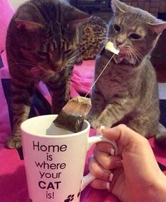 Home is where your cat is taking care of business!