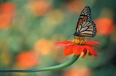fotos de mariposas de fantasia