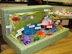 how to make a plant cell model with house materials