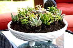 Succulents...they might actually be unkillable