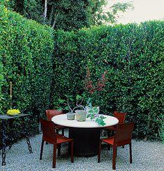 tall hedge & gravel