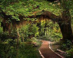 Olympic Peninsula – Washington