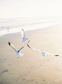 Oncewed Magazine Jose Villa Seagulls