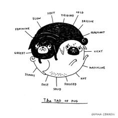a pug as a best friend. More animal yin/yang.