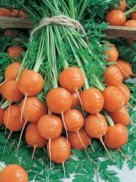 FYI; Parisian Carrots (55 days)…