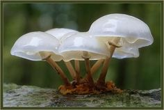 mushrooms - Pixdaus