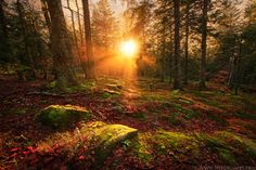 Woodland Enchantment by Maxime Courty.