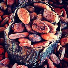 Where chocolate gets its start -- Mayordomo, Oaxaca Mexico