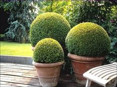 Boxwoods are a must...