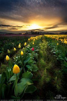 Skagit Valley Sunrise - Seattle, Washington