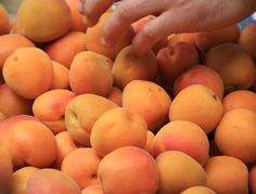 Apricots in Provence