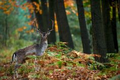 Photo Autumn is coming by Stefan Rosengarten on 500px