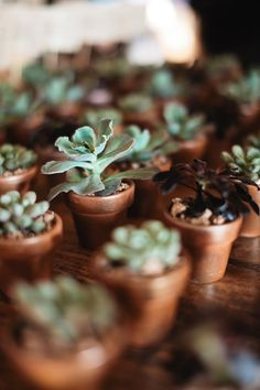 Succulents in mini-clay pots served as escort cards and favors ~ another shot of it here:  stylemepretty.com... / Photography by Sunny 16 Photography, Floral Design by Last Petal