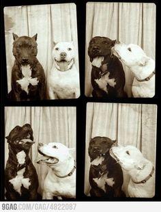 """""""puppy love"""" :D"""