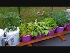 New Improvements To The Self Watering Rain Gutter Grow System! Grow Baby...