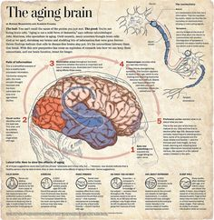 The aging brain #infographic