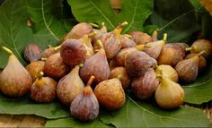 Tips on pruning a Fig tree