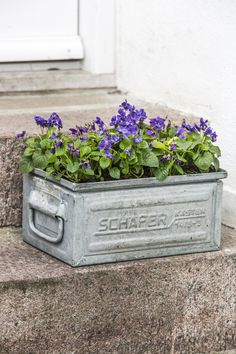 purple posies in upcycled galvanized planter