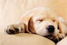 10 Lazy Dog Breeds, Perfect For Cuddling