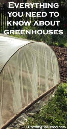 Everything You Need To Know About Greenhouses | GrowingRealFood.com #gardening