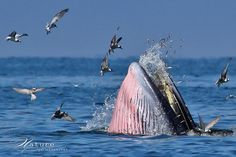 dolphin, bird, sompob sasismit, anim, bryde whale, amaz, natur, sea, whales