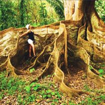 roots, costarica, costa rica, natur, trees, beauti, tree root, place, amaz tree