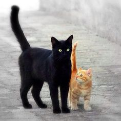 Black cat with orange kitten