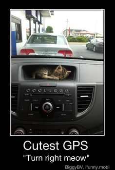 turn right meow