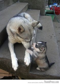 """Mom they're calling me husky!"""
