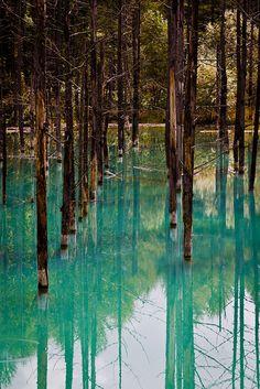 Swampland, Resort 2012/13: Zoom