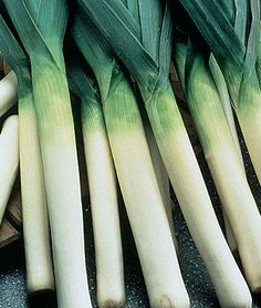 Leeks,another fav xxx