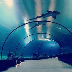 Aquariums By Saraeu On Pinterest Aquarium Fish Tanks And Aquarium Design