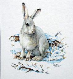 Vintage 1980's Snowshoe Hare. Printed in Germany