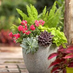 Potted plant: Love the succulents on the outside.. I planted a lot of big pots with palms in the center and flowers around but I'm loving this look--must remember for next year!