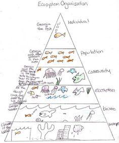 Ecosystem Pyramid student work (my science box)