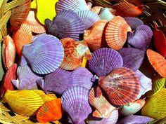 Multicolored shells | Flickr - Photo Sharing!