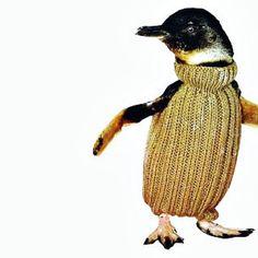 Cute Penguins in Sweaters